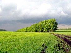В Крыму возьмутся за сохранение лесополос