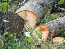 В Крыму поймали браконьера-лесоруба