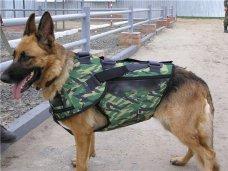 В колониях Крыма появились новые служебные собаки