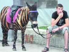 В ходе рейдов в Крыму было изъято 12 животных и птиц