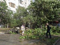В Ялте устраняют последствия урагана