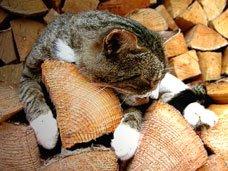 В Крыму разрешили санитарные рубки леса и продажу дров