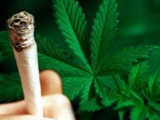 Житель Севастополя осужден на 10 лет колонии за попытку сбыта марихуаны