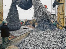 Антимонопольная служба открыла производство в отношении Керченского рыбного порта