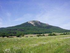 Прокурорская проверка законности использования рекреационных земель в Байдарской долине установила ущерб более 180 млн. рублей
