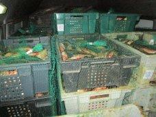На границе с Крымом дважды был задержан груз с протухшей рыбой с Украины
