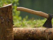 По факту уничтожения деревьев в восточном Крыму возбуждено уголовное дело