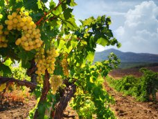 Крымским и севастопольским виноделам продлили переходный период
