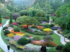 Преимущества декоративных растений для сада