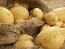 За прошедшую неделю Россельхознадзор вернул на Украину 20 процентов грузов