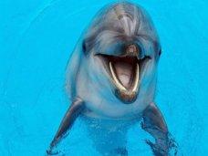 Из судакского дельфинария по поддельным документам пытались вывезти морских животных