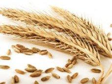 Минэкономразвития Крыма до 10 февраля разработает меры по поддержке малых сельхозпроизводителей Крыма