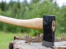 Ялтинские депутаты требуют ужесточить наказание за вырубку реликтовых и вековых деревьев