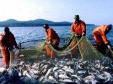 По итогам 2014 года более 75% улова было добыто рыбодобывающими предприятиями Севастополя
