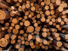 В Ялте будут судить лесника за попытку похищения древесины из заповедника
