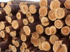 Ялтинский суд осудил лесника, пытавшегося украсть из заповедника древесину