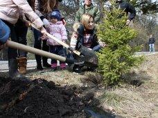 Поклонская посадила ели в крымском заповеднике