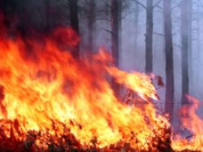 В Крыму началась подготовка к пожароопасному сезону