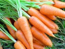 Морковь - красивая, полезная, вкусная