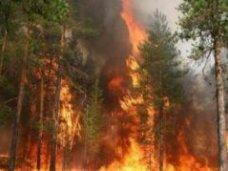 Госкомлес Крыма проводит мероприятия по предотвращению возгораний в горно-лесной зоне Крыма