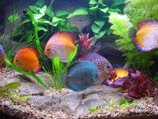 В Евпатории откроют Аквариум, в котором будут обитать более 100 видов рыб (ФОТО)