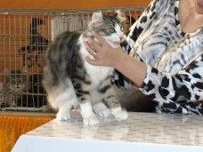 В Симферополе состоялось шоу беспородных животных