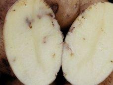 На въезде в Крым была обнаружена крупная партия картофеля, заражённого карантинным вредителем