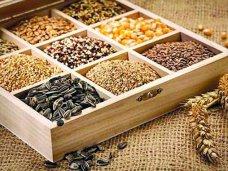 Семена - урожайность, всхожесть и особенности выбора